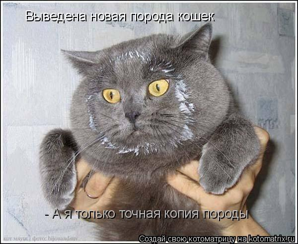 Котоматрица: Выведена новая порода кошек - А я только точная копия породы