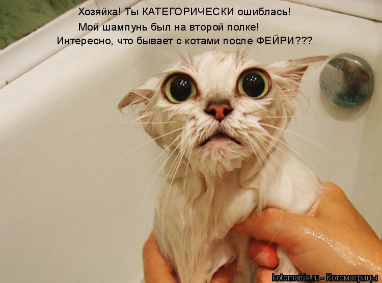Котоматрица: Хозяйка! Ты КАТЕГОРИЧЕСКИ ошиблась! Мой шампунь был на второй полке! Интересно, что бывает с котами после ФЕЙРИ???