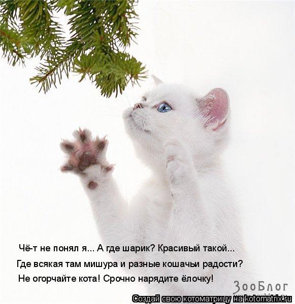 Котоматрица: Чё-т не понял я... А где шарик? Красивый такой... Где всякая там мишура и разные кошачьи радости? Не огорчайте кота! Срочно нарядите ёлочку!