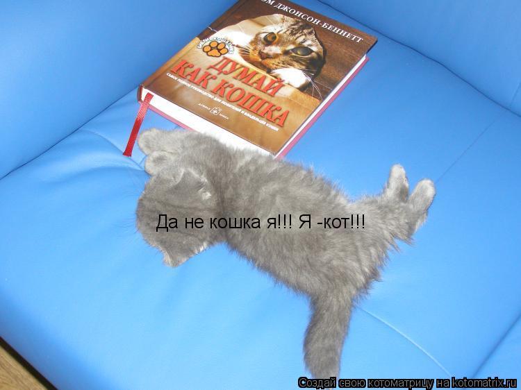 Котоматрица: Да не кошка я!!! Я -кот!!!