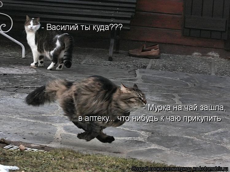Котоматрица: - Василий ты куда??? - Мурка на чай зашла,  в аптеку... что нибудь к чаю прикупить