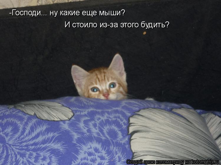 Котоматрица: -Господи... ну какие еще мыши?  И стоило из-за этого будить?