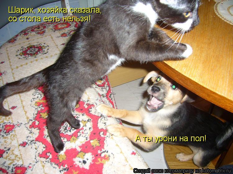Котоматрица: Шарик, хозяйка сказала, со стола есть нельзя! А ты урони на пол!