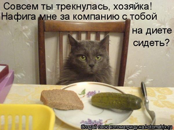Котоматрица: Совсем ты трекнулась, хозяйка! Нафига мне за компанию с тобой на диете сидеть?
