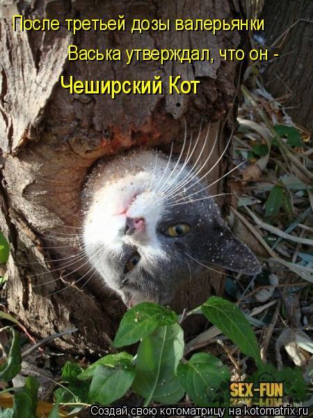 Котоматрица: После третьей дозы валерьянки Чеширский Кот Васька утверждал, что он -