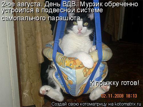 Котоматрица: 2-ое августа. День ВДВ. Мурзик обреченно    устроился в подвесной системе самопального парашюта. К прыжку готов!