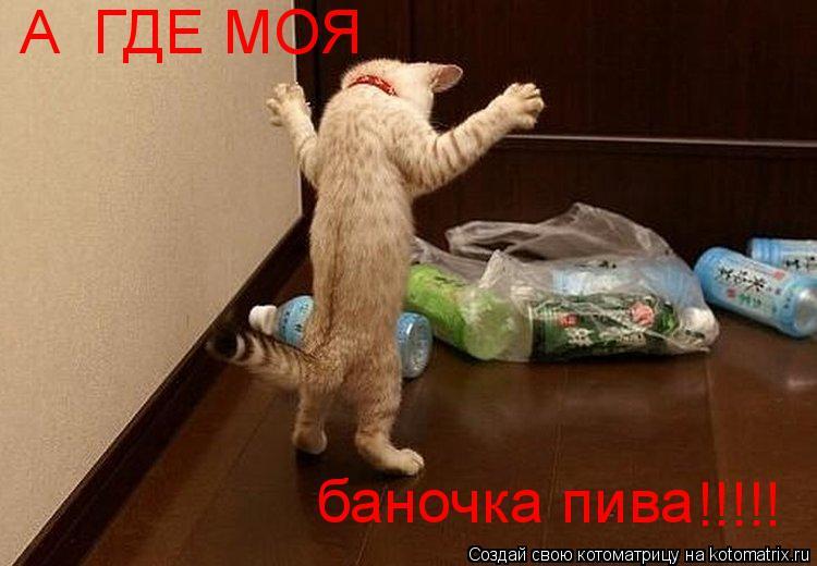 Котоматрица: А  ГДЕ МОЯ баночка пива !!!!!