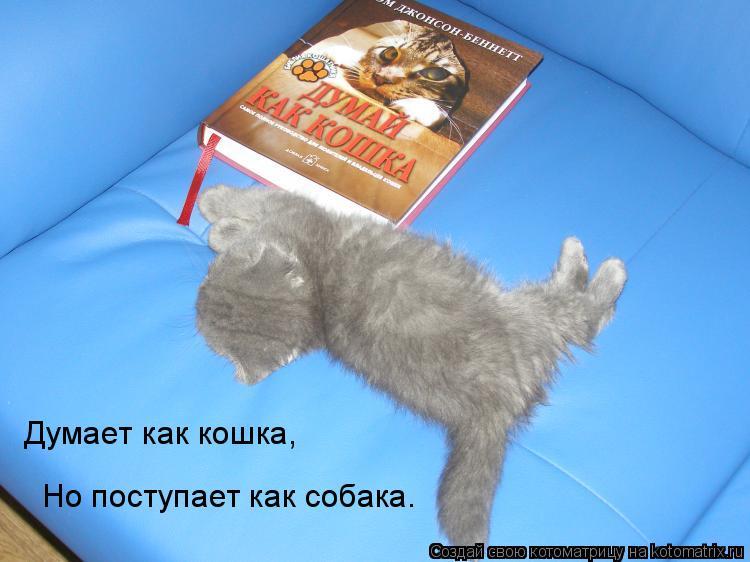 Котоматрица: Думает как кошка, Но поступает как собака.