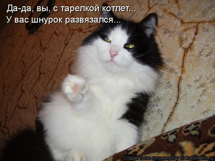 Котоматрица: Да-да, вы, с тарелкой котлет... У вас шнурок развязался...