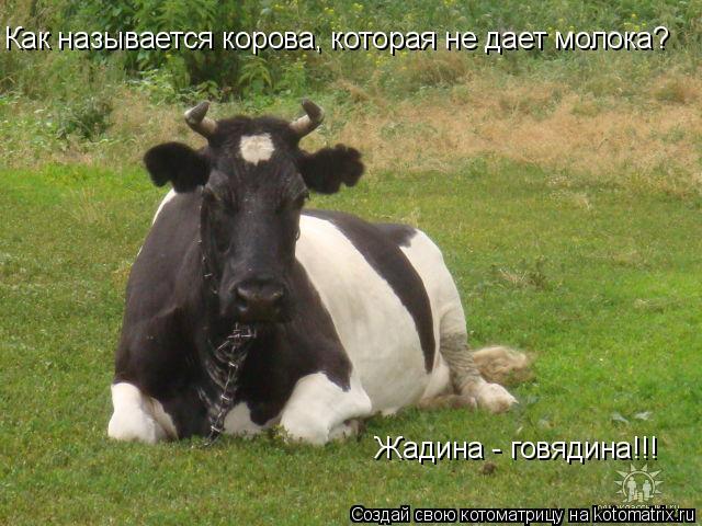 Котоматрица: Как называется корова, которая не дает молока?  Жадина - говядина!!!