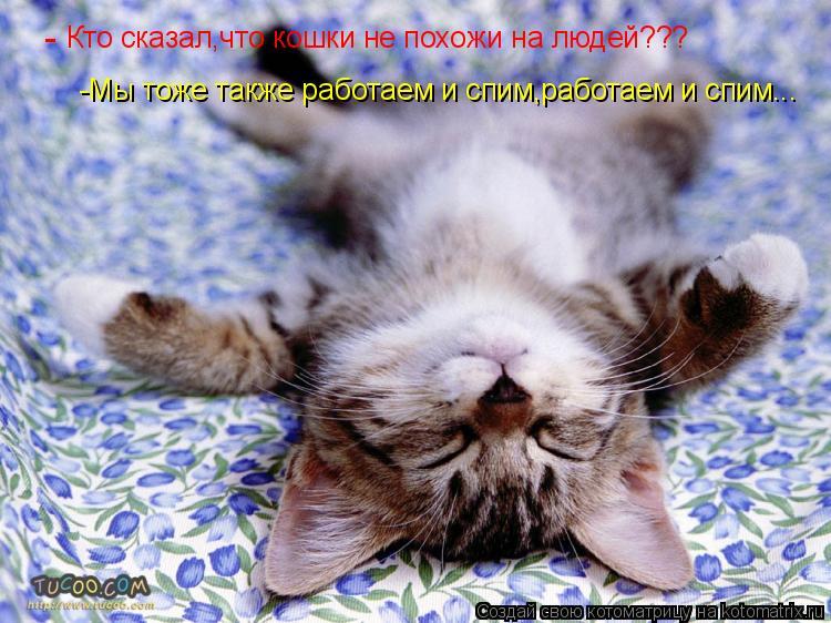 Котоматрица: Кто сказал,что кошки не похожи на людей??? - -Мы тоже также работаем и спим,работаем и спим...