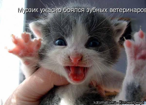 Котоматрица: Мурзик ужасно боялся зубных ветеринаров!