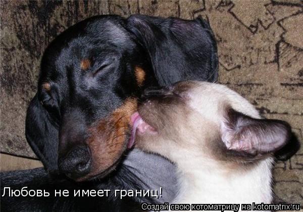 Котоматрица: Любовь не имеет границ!