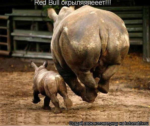 Котоматрица: Red Bull окрыляяяееет!!!