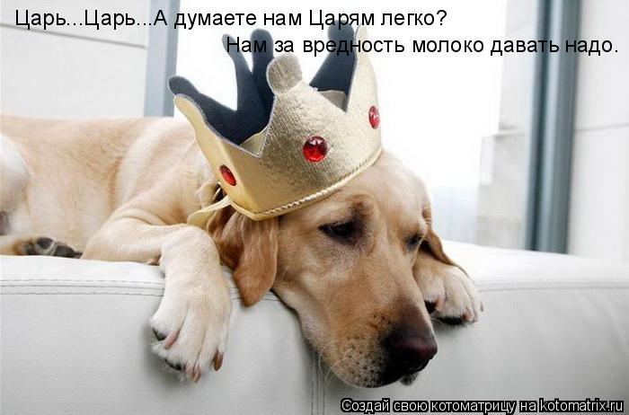 Котоматрица: Царь...Царь...А думаете нам Царям легко? Нам за вредность молоко давать надо.