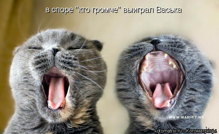 """Котоматрица: в споре """"кто громче"""" выиграл Васька"""