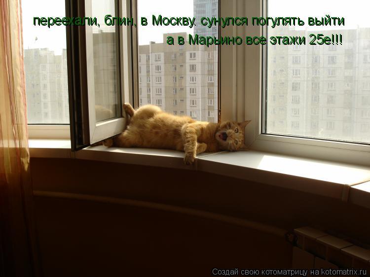 Котоматрица: переехали, блин, в Москву. сунулся погулять выйти а в Марьино все этажи 25е!!!