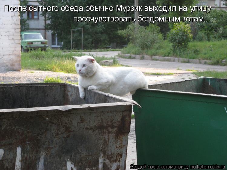 Котоматрица: После сытного обеда,обычно Мурзик выходил на улицу посочувствовать бездомным котам....