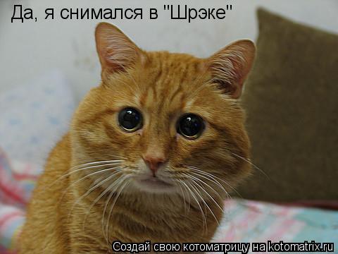 """Котоматрица: Да, я снимался в """"Шрэке"""""""