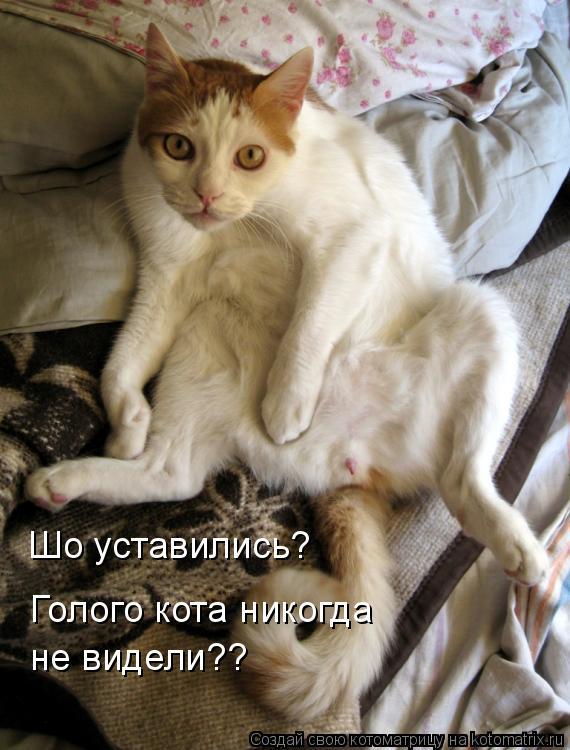 Котоматрица: Шо уставились? Голого кота никогда не видели??