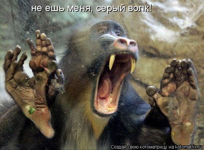 Котоматрица: не ешь меня, серый волк!