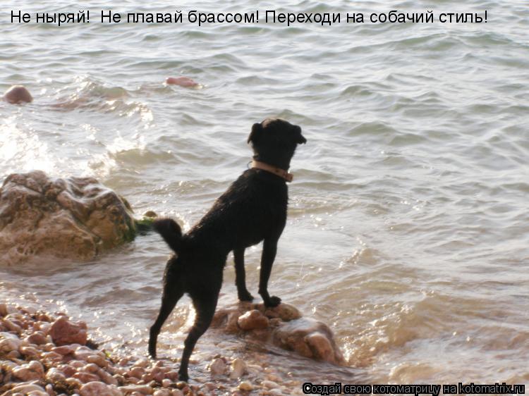 Котоматрица: Не ныряй!  Не плавай брассом! Переходи на собачий стиль!