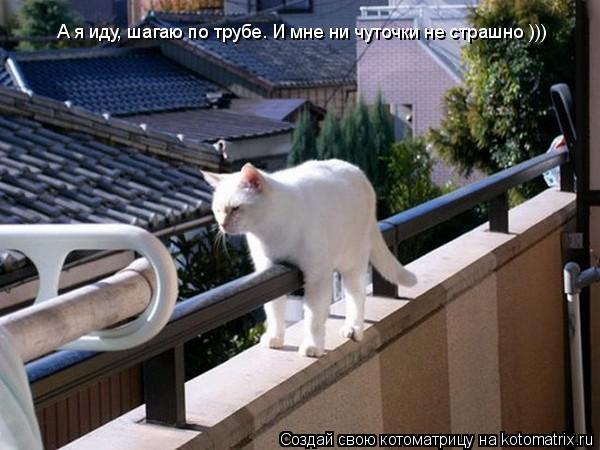 Котоматрица: А я иду, шагаю по трубе. И мне ни чуточки не страшно )))