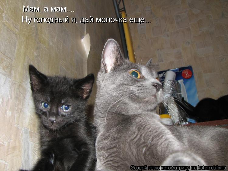 Котоматрица: Мам, а мам.... Ну голодный я, дай молочка еще...