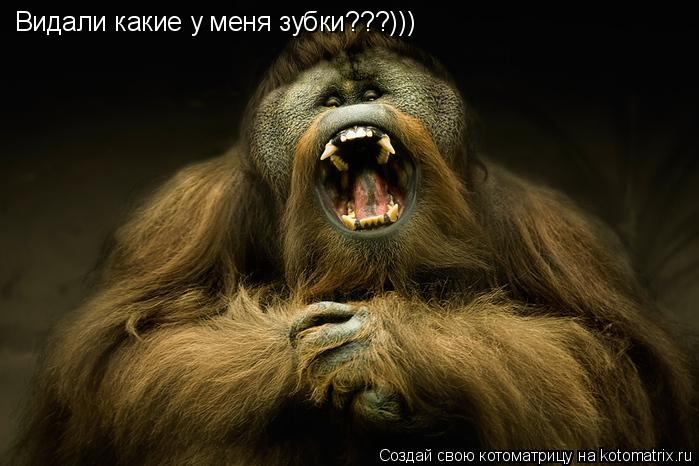 Котоматрица: Видали какие у меня зубки???)))
