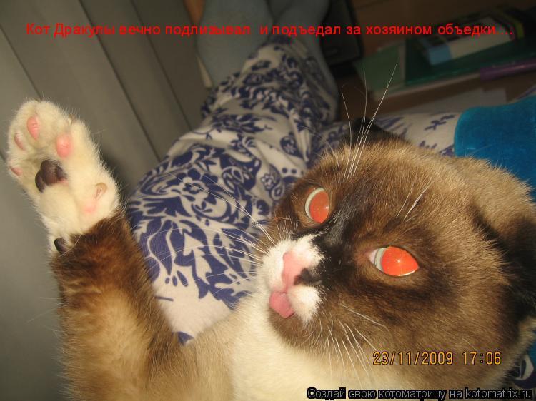 Котоматрица: Кот Дракулы вечно подлизывал  и подъедал за хозяином объедки....