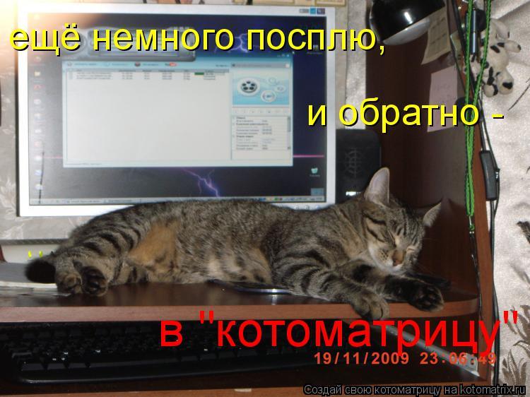 """Котоматрица: ещё немного посплю, и обратно - в """"котоматрицу"""""""