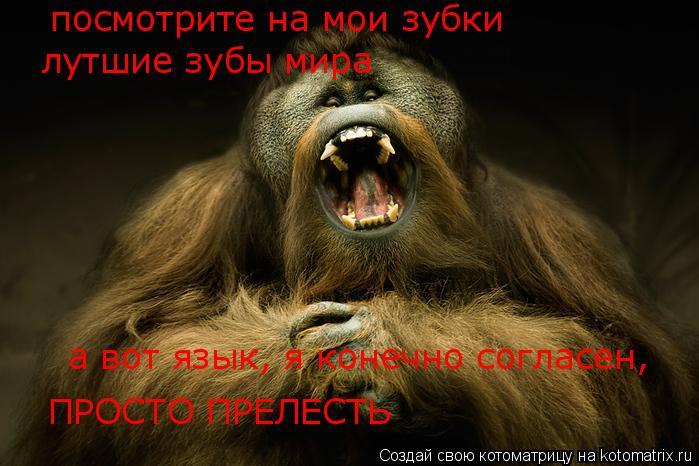 Котоматрица: посмотрите на мои зубки лутшие зубы мира а вот язык, я конечно согласен, ПРОСТО ПРЕЛЕСТЬ