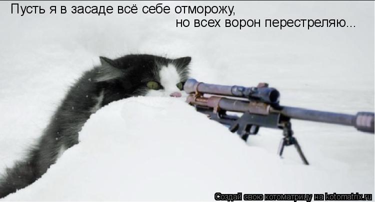 Котоматрица: Пусть я в засаде всё себе отморожу, но всех ворон перестреляю...