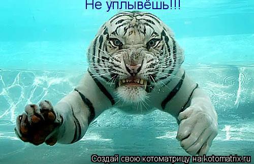 Котоматрица: Не уплывёшь!!!