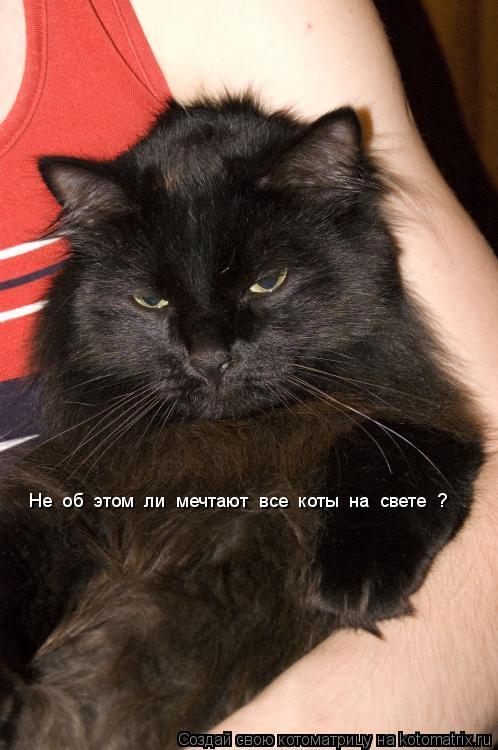 Котоматрица: Не  об  этом  ли  мечтают  все  коты  на  свете  ?