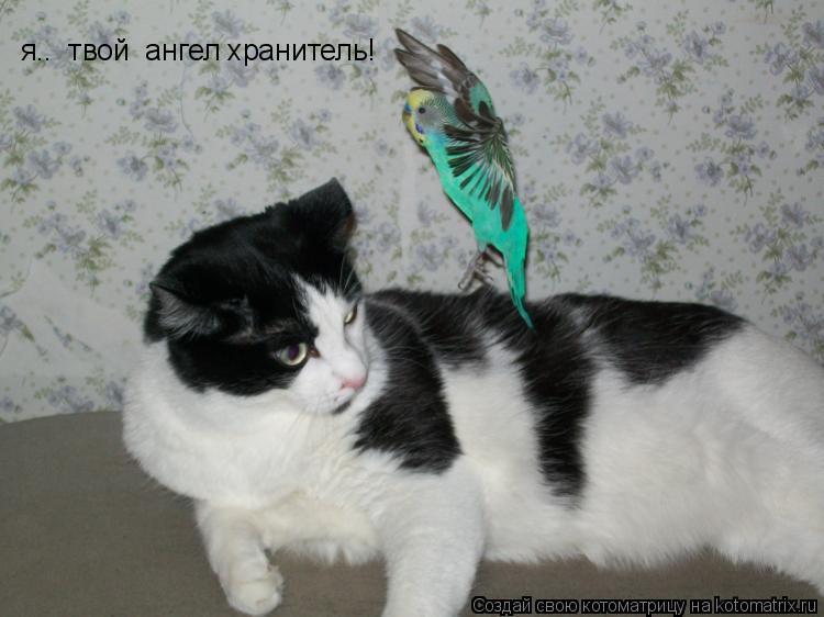 Котоматрица: я..  твой  ангел хранитель!
