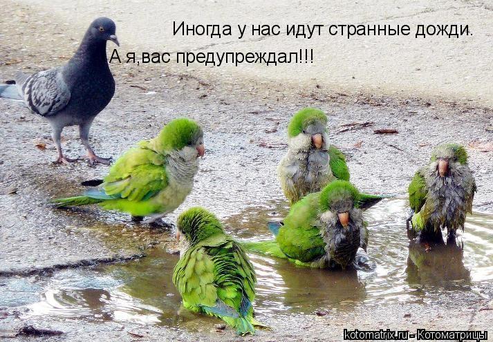 Котоматрица: Иногда у нас идут странные дожди. А я,вас предупреждал!!!