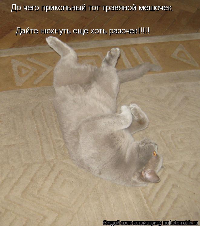 Котоматрица: До чего прикольный тот травяной мешочек, Дайте нюхнуть еще хоть разочек!!!!!