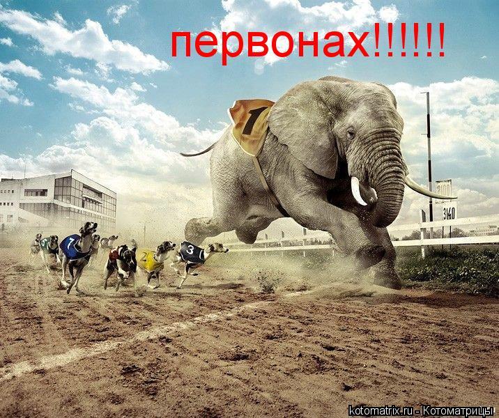 Котоматрица: первонах!!!!!!