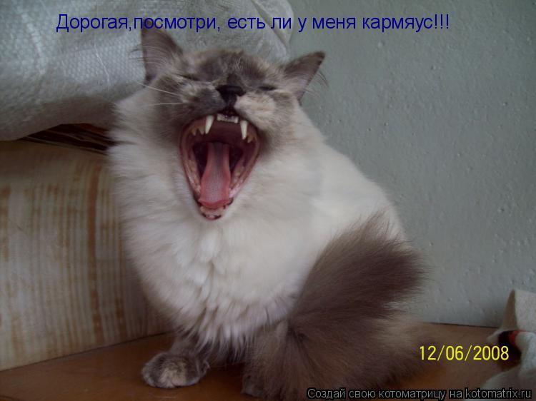 Котоматрица: Дорогая,посмотри, есть ли у меня кармяус!!!