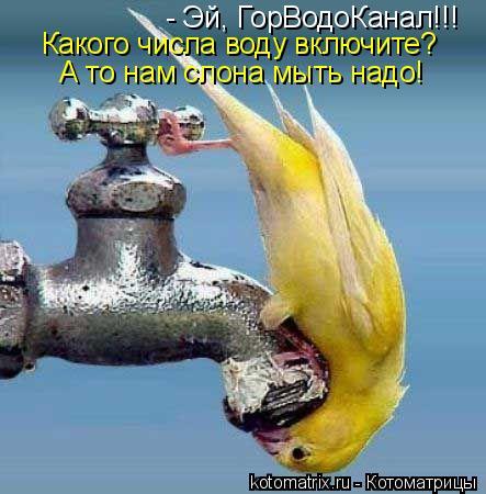 Котоматрица: - Эй, ГорВодоКанал!!! Какого числа воду включите? А то нам слона мыть надо!