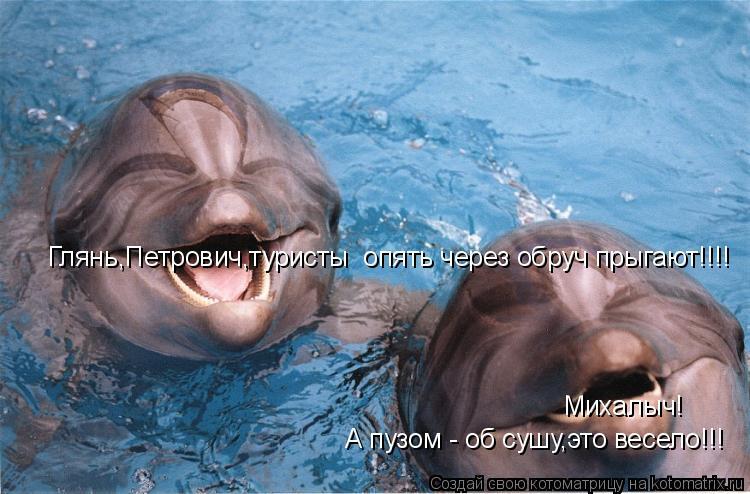 Котоматрица: Глянь,Петрович,туристы  опять через обруч прыгают!!!! Михалыч! А пузом - об сушу,это весело!!!