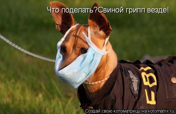 Котоматрица: Что поделать?Свиной грипп везде!