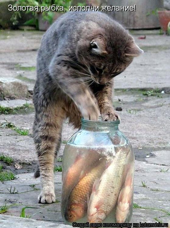 Котоматрица: Золотая рыбка, исполни желание!