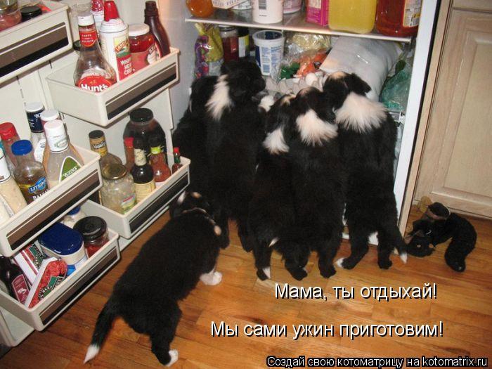 Котоматрица: Мама, ты отдыхай! Мы сами ужин приготовим!