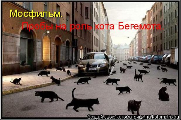 Котоматрица: Мосфильм.  Пробы на роль кота Бегемота.