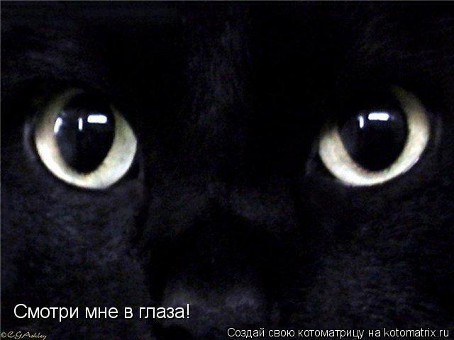 Котоматрица: Смотри мне в глаза!