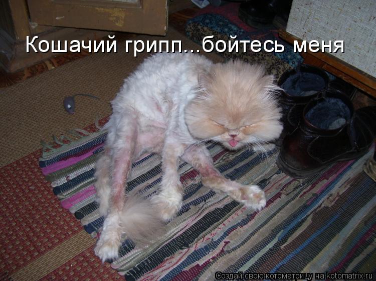 Котоматрица: Кошачий грипп...бойтесь меня