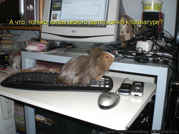 Котоматрица: А что, только котам можно валяться на клавиатуре?