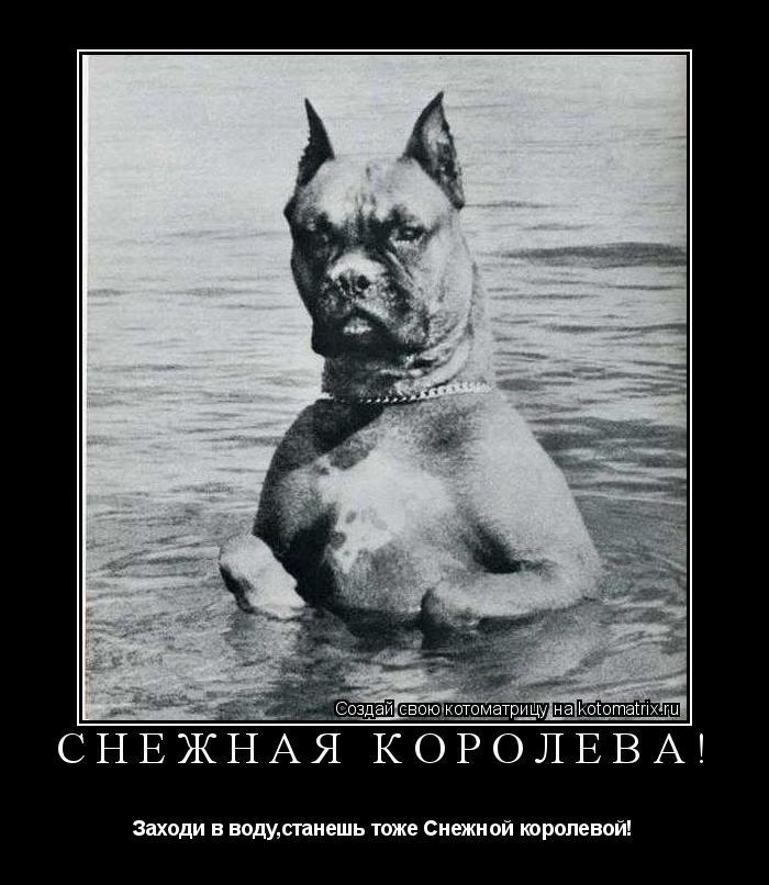 Котоматрица: Снежная королева! Заходи в воду,станешь тоже Снежной королевой!